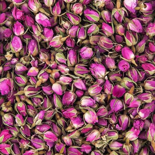 برنامه تغذیه گل محمدی